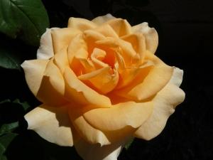 La reine du jardinP1000283