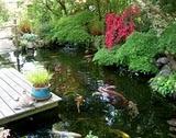 jardin Sylvie 18 04 2011 038[1]